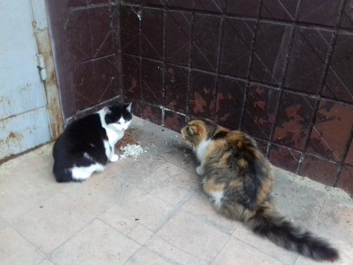 От бездомных котов воняет в подъезде, а выгнать жалко: что делать