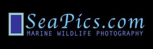 15 мест где можно продать фотографии природы