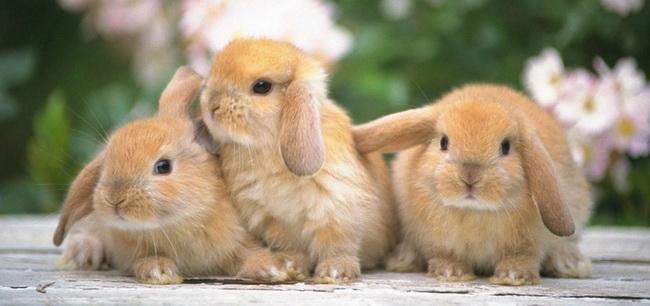 Бизнес-план по разведению кроликов - советы успешных фермеров