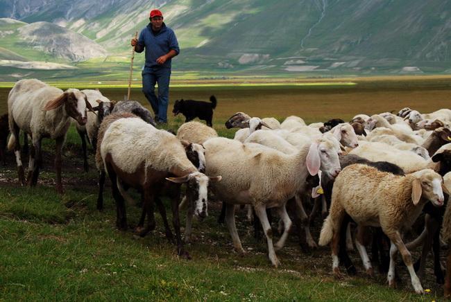 Овцеводство как бизнес привлекательный и доходный