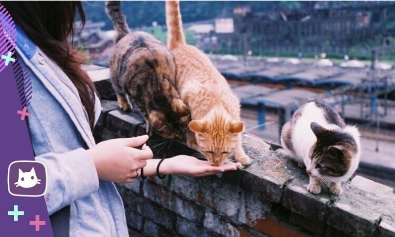 😺Содержание кошки: на чем экономить, а на чем нет