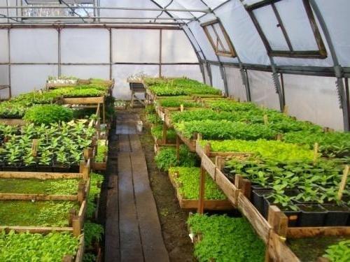 Выращивание цветов на продажу в домашних условиях: бизнес-планы, отзывы